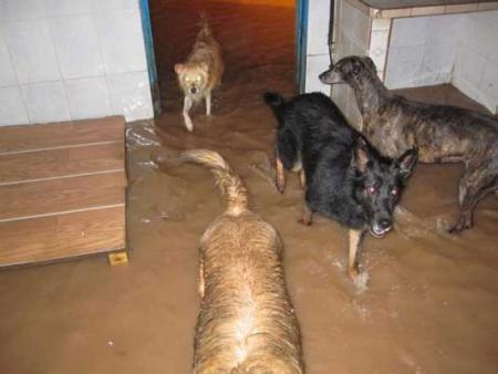 385 perrros necesitan ayuda
